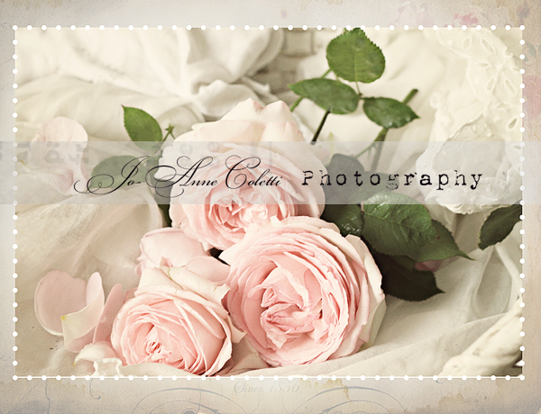 Petal Pink Note Cards-shabby chic note cards, romantic cards, vintage roses, Jo-Anne Coletti